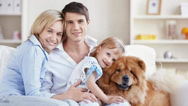 Wills & Trusts dog-young-family Direct Wills Malvern Link